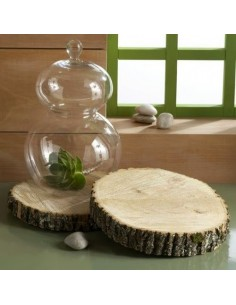 Plato tronco madera