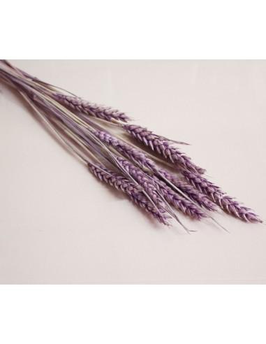 Trigo seco lila