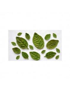 Molde de silicona hojas variadas