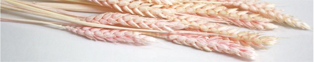 Comprar moldes y utensilios para hacer flores de repostería | Dulcemisú